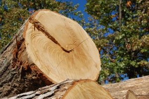Oak Log - Hardwood Lumber Supplier