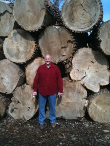 Huge Cottonwood Logs